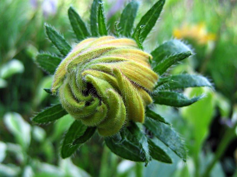 Flower Bud In Garden Free Public Domain Cc0 Image