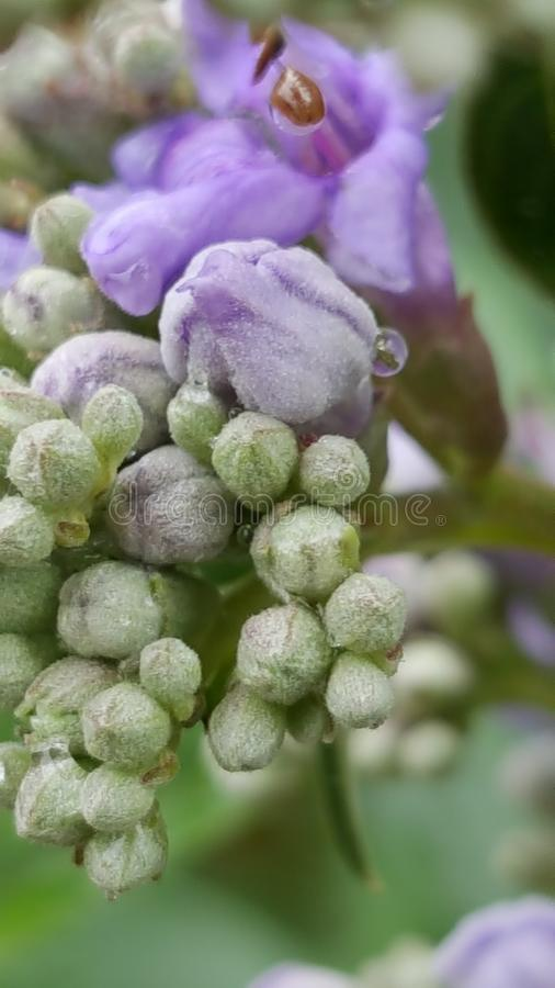 Flower bud stock images