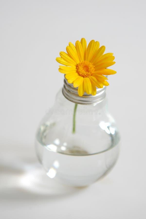 Flower in a bulb. Flower in a light bulb stock photos