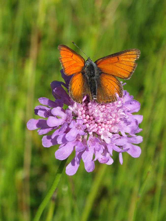 Flower with butterfly stock images