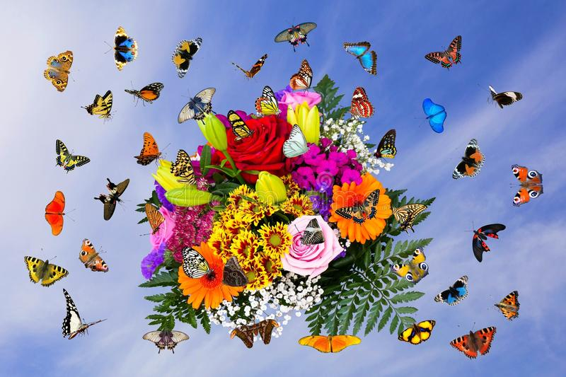 Flower, Butterfly, Moths And Butterflies, Insect stock photos