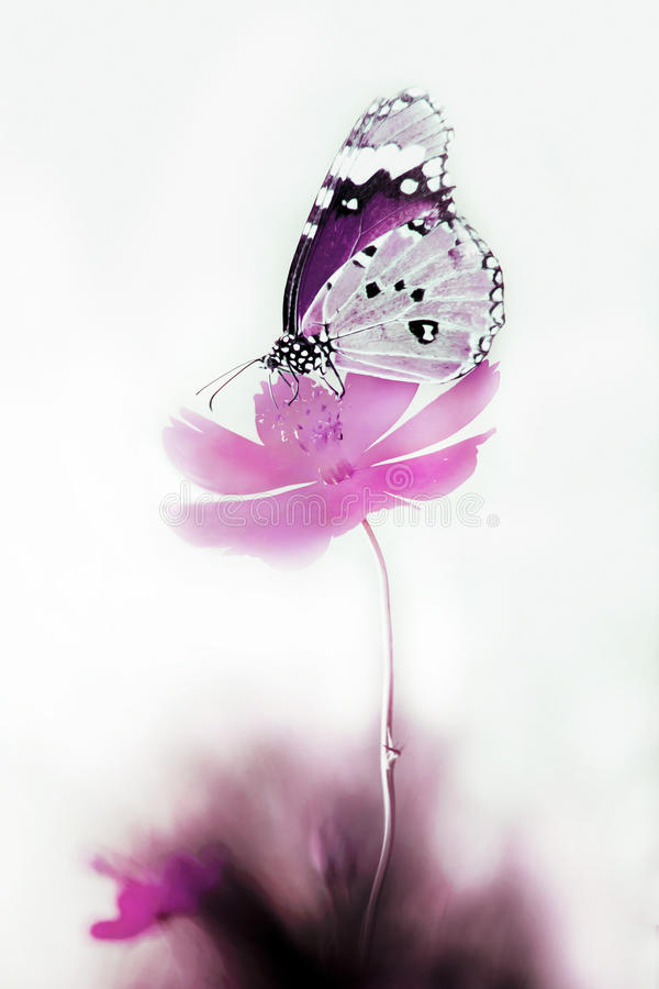Flower and butterfly vector illustration