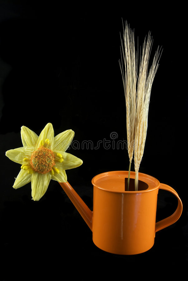 Flower can with wheat spikes royalty free stock photography