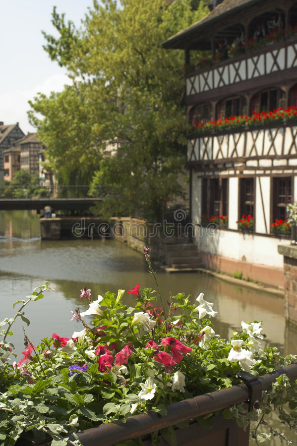 Flower and canal royalty free stock photo