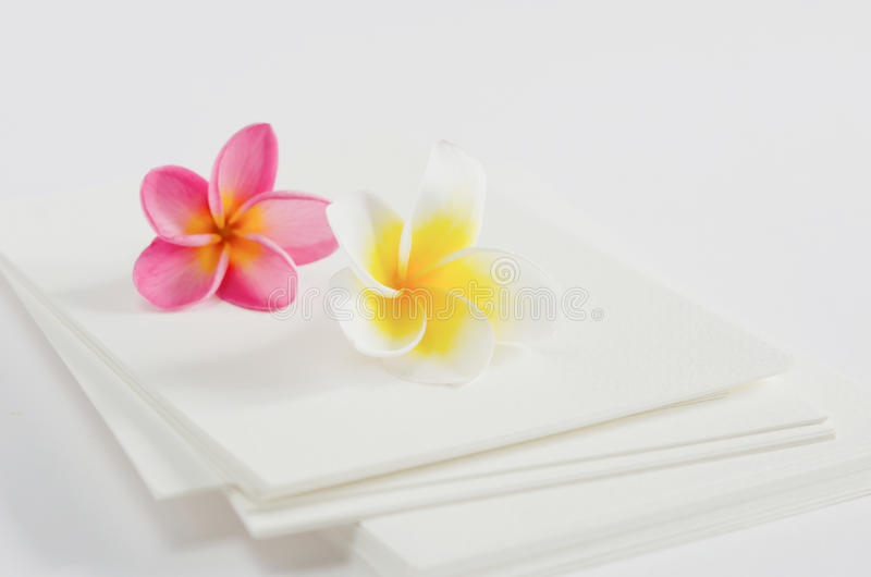 Flower and card royalty free stock photos