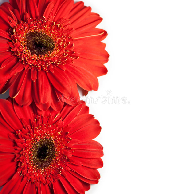 Download Flower Card With Space For Text Stock Photo - Image: 18378394