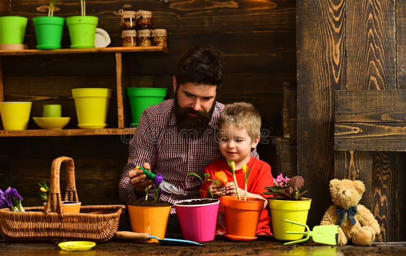 Flower care watering. Soil fertilizers. bearded man and little boy child love nature. Family day. Greenhouse. Father and stock photography