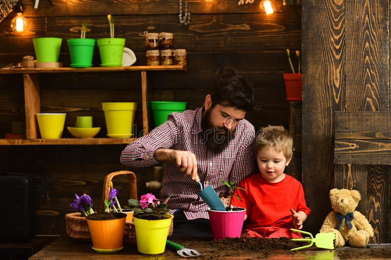 Flower care watering. Soil fertilizers. Family day. Greenhouse. happy gardeners with spring flowers. Father and son stock photos