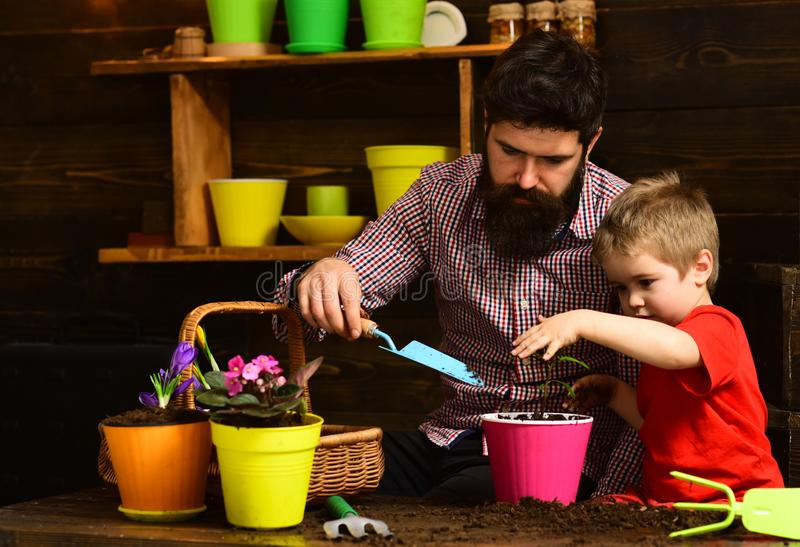 Flower care watering. Soil fertilizers. Family day. Greenhouse. happy gardeners with spring flowers. Father and son royalty free stock photos