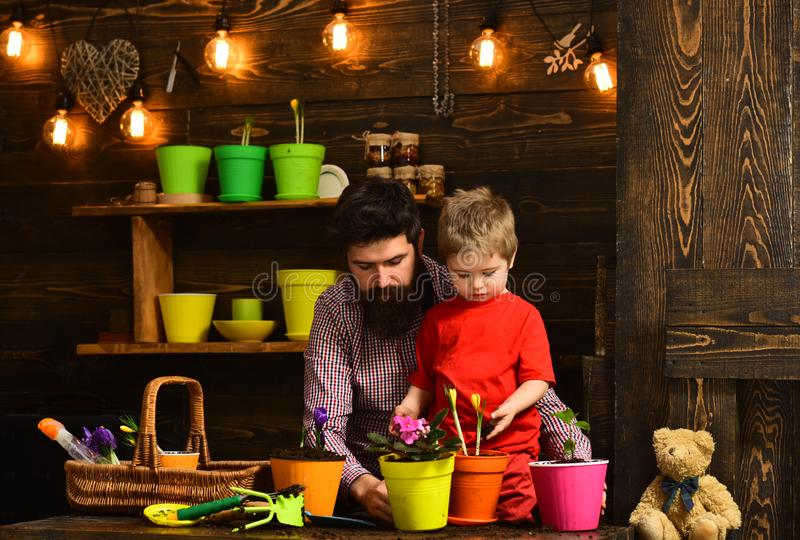 Flower care watering. Soil fertilizers. happy gardeners with spring flowers. Father and son. Fathers day. Family day. Greenhouse. bearded men and little boy royalty free stock photos