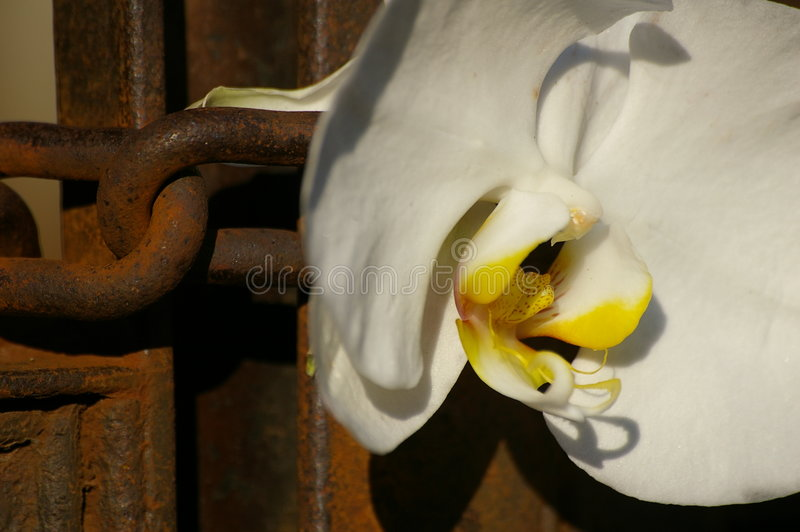 Flower and chain royalty free stock photography