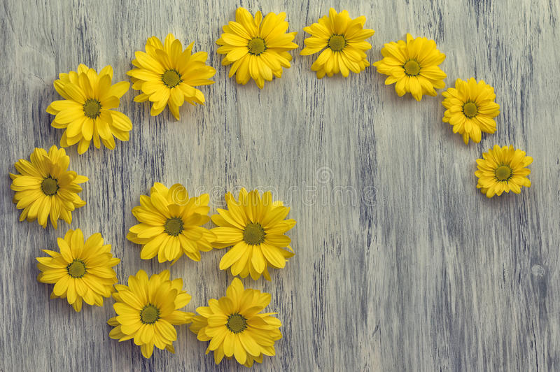 A flower of chrysanthemum on a wooden surface. The background stock photo