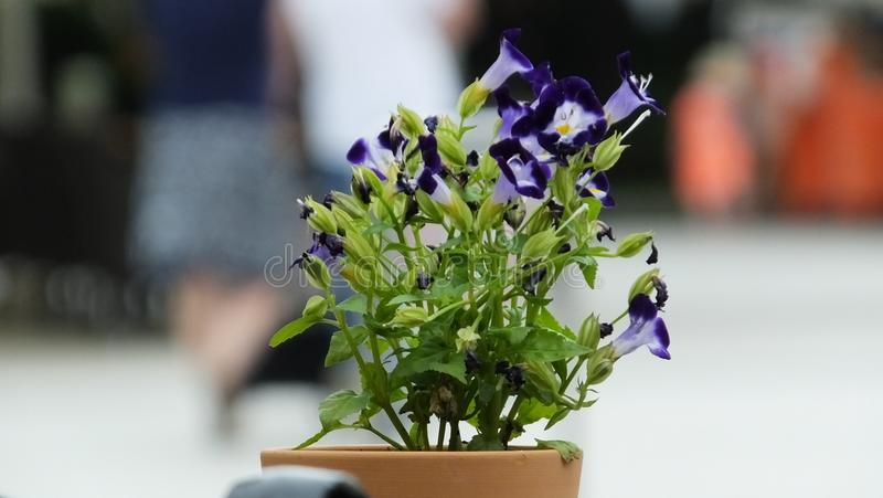 Flower in the city Cakovec stock photos