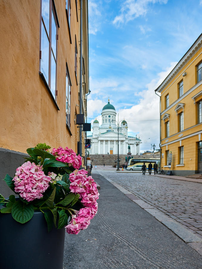 Flower close up Helsinki senate square. On nice summer day royalty free stock images