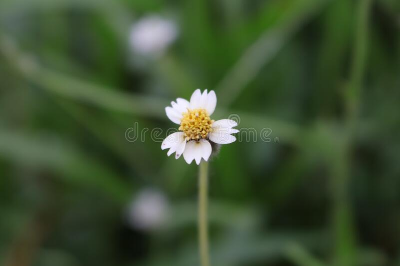 Flower in close up shot. This flower are white and yollow color. this is close up shot stock photography