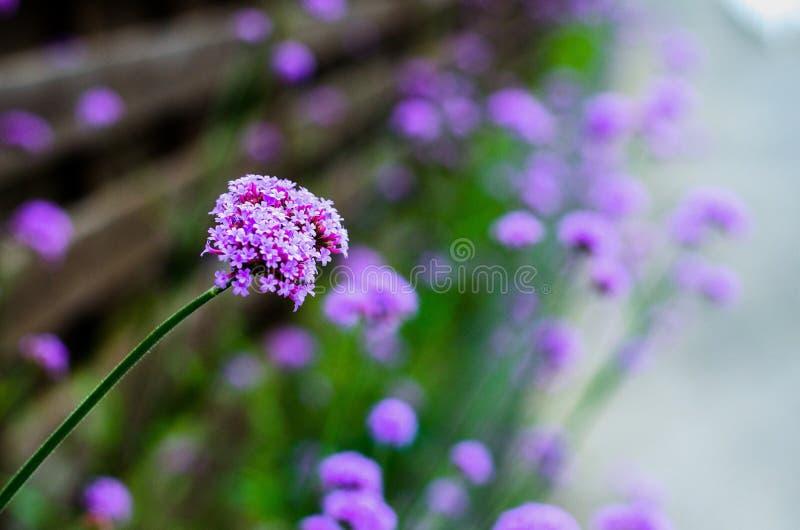 Flower. Close up violet flower royalty free stock images