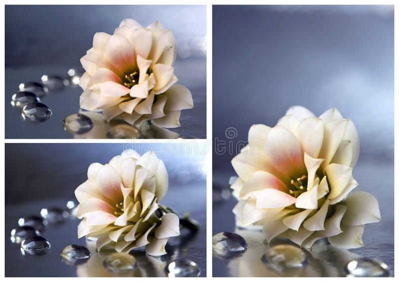 Download Flower collage stock image. Image of dalia, close, detail - 18497561