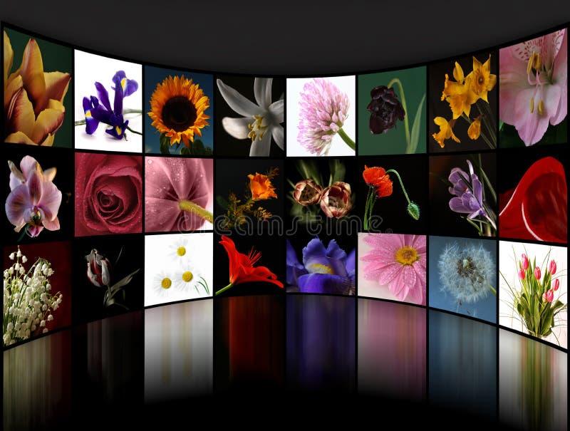 Flower collage royalty free illustration