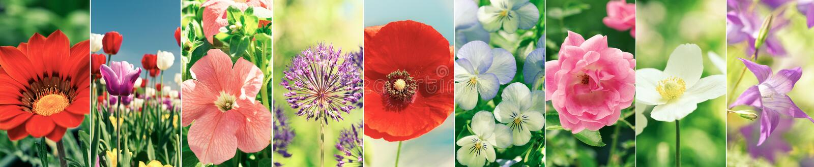 Flower collage of various types summer flowers stock photos