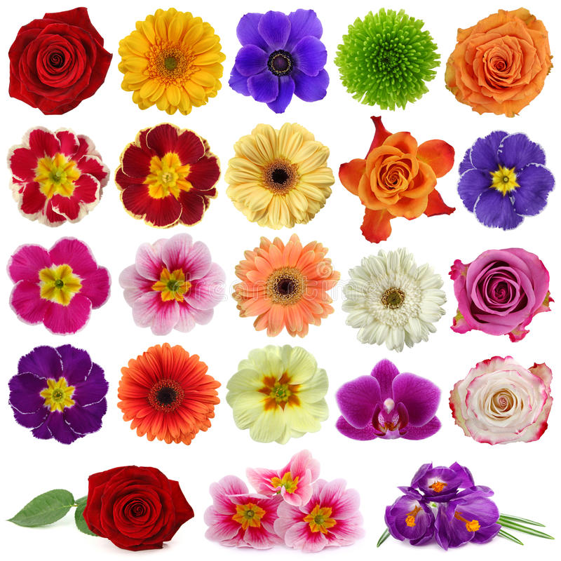 Free Flower Collection Stock Images - 13139364