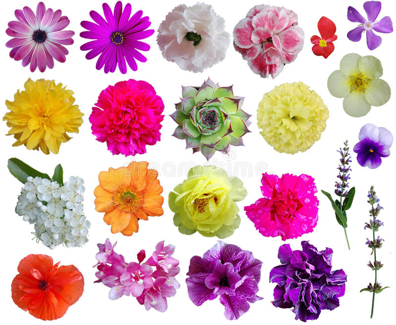 Flower collection 1 royalty free stock photography