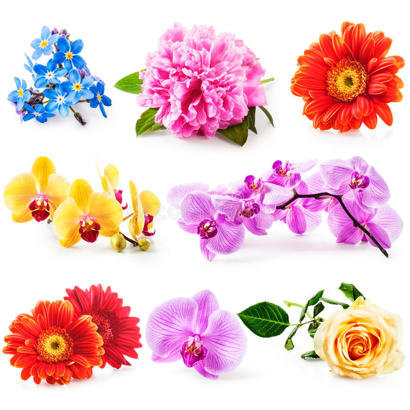 Flower collection stock photo