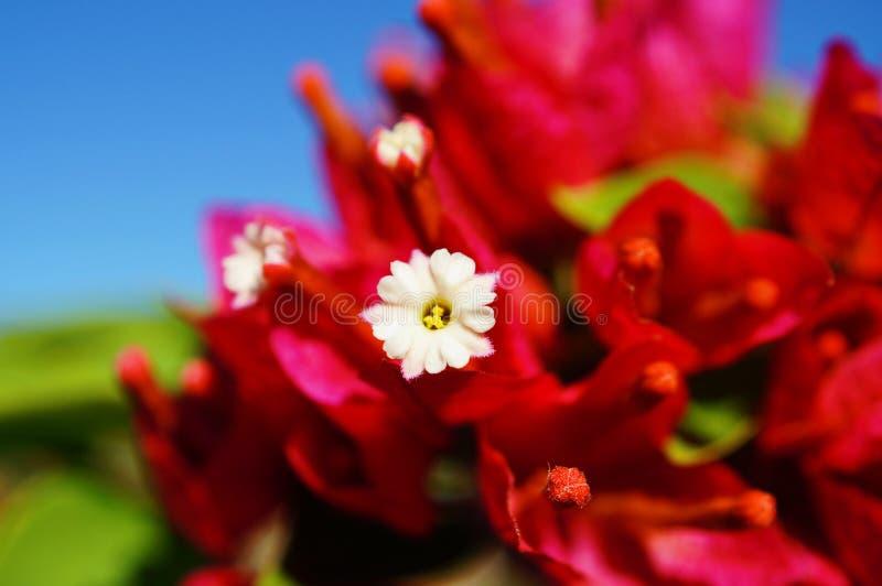 Flower color full stock photos