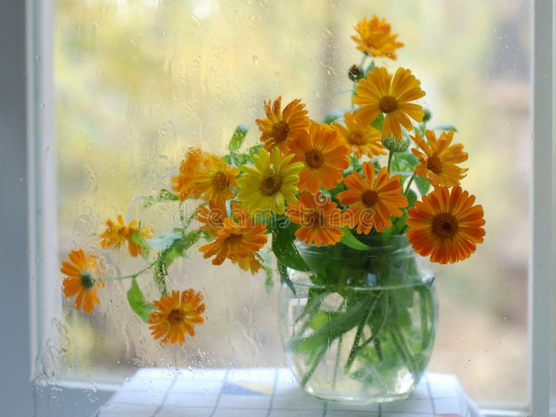 Flower comp. Orange flowers on my window. My flowers on rainy day. Picture with autumn Flowers stock photos