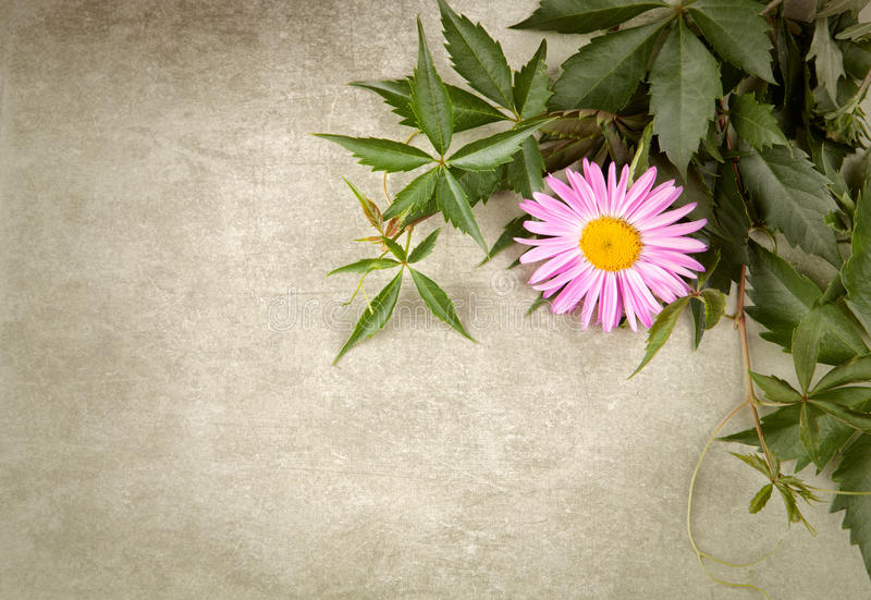 Download Flower composition stock photo. Image of album, flourishes - 26888068