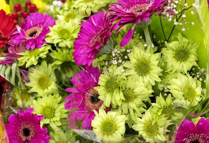Flower composition from different types of flowers.  royalty free stock image