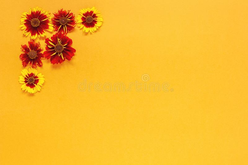 Flower composition. Several yellow red flowers in the top left corner on orange background. Flat lay Top-down composition. Copy. Space Template for postcard stock images