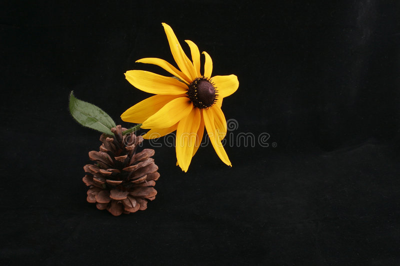Flower in cone stock photos