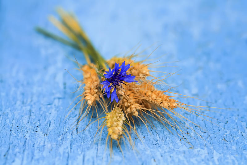 Flower cornflower, and corn bread laying on blue painted surface stock image