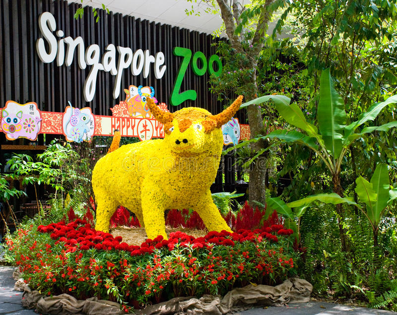 Flower Cow in Singapore Zoo stock image