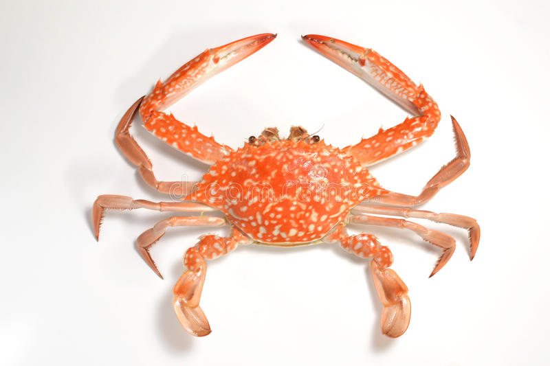 Flower crab. On a white background royalty free stock photos