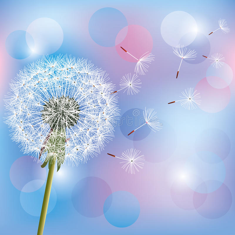 Download Flower Dandelion On Light Blue - Pink Background Stock Vector - Image: 24165792
