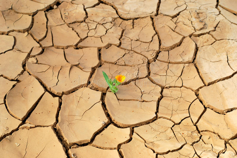 Flower in desert stock image