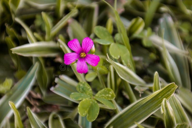 Flower. Detalhe da Pequena Flor na Grama royalty free stock photos