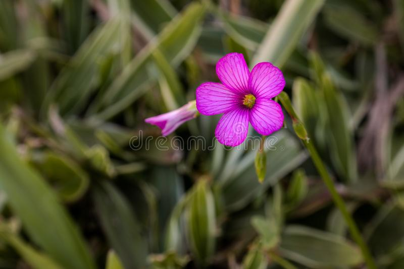 Flower. Detalhe da Pequena flor na grama stock photos