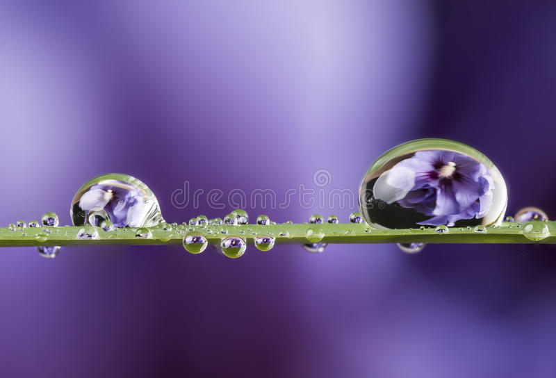 Flower and dew drops. A flower and dew drops stock photos