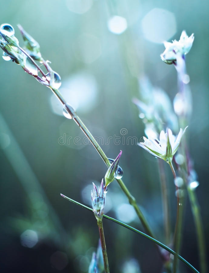 Flower in dew. Flowers in the dew in the sun royalty free stock image