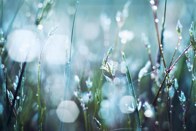 Flower in dew. Flowers in the dew in the sun royalty free stock photos