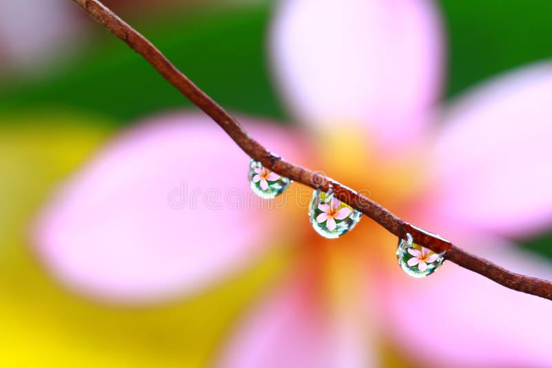 Flower in dewdrops royalty free stock photos