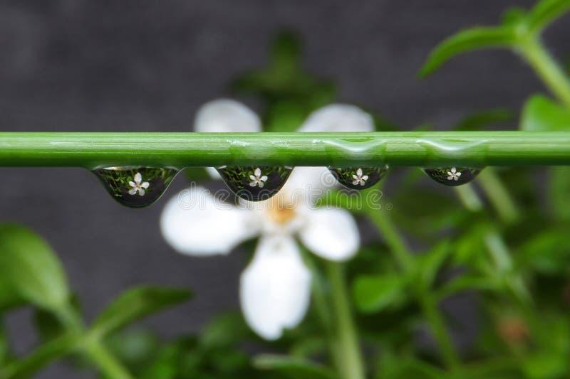 Flower in drop stock image