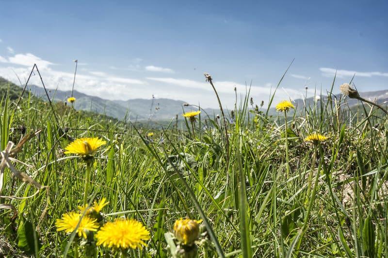 Flower, Ecosystem, Grassland, Yellow Free Public Domain Cc0 Image