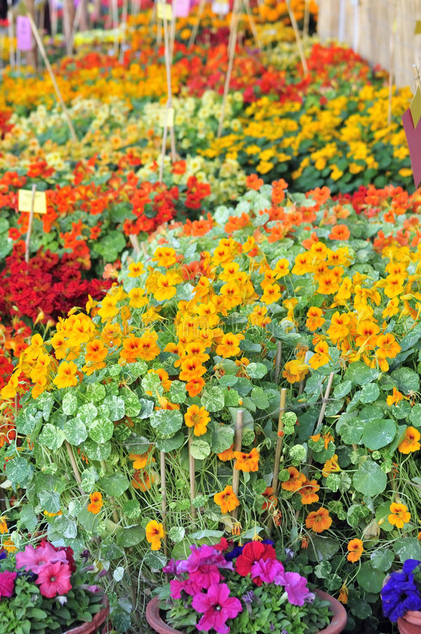 Download Flower exhibition stock image. Image of spring, decoration - 13304677