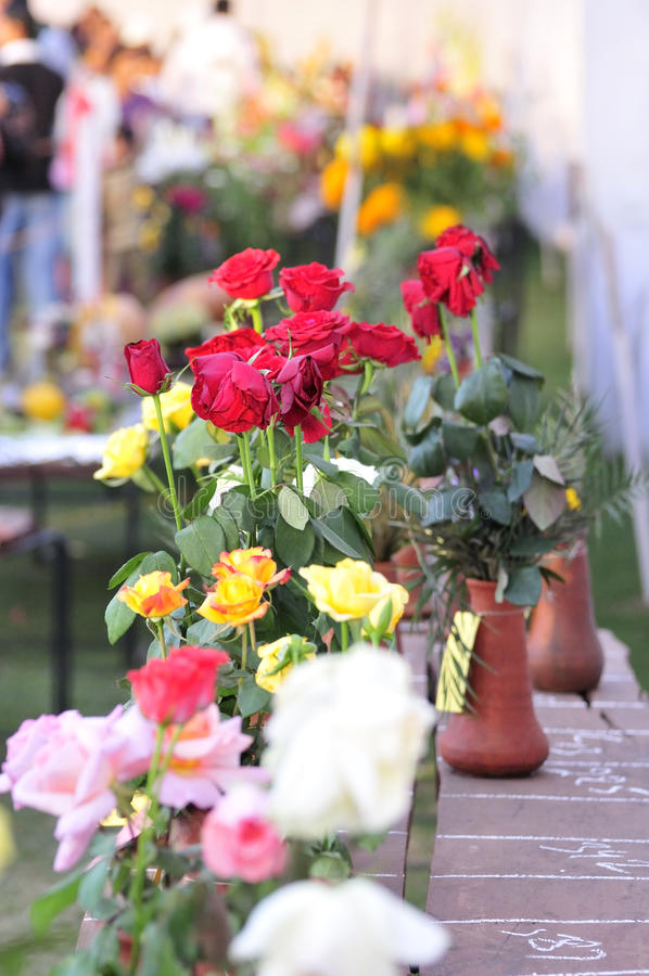 Download Flower exhibition stock image. Image of bloom, stamen - 13305737