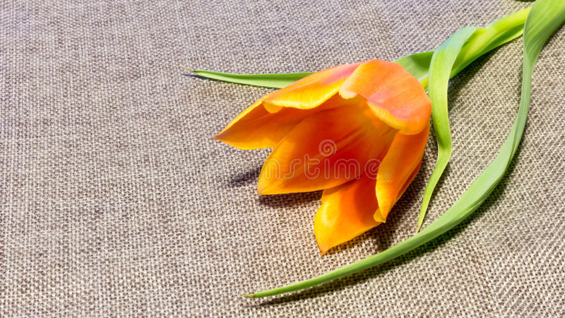 Flower on the fabric background royalty free stock images