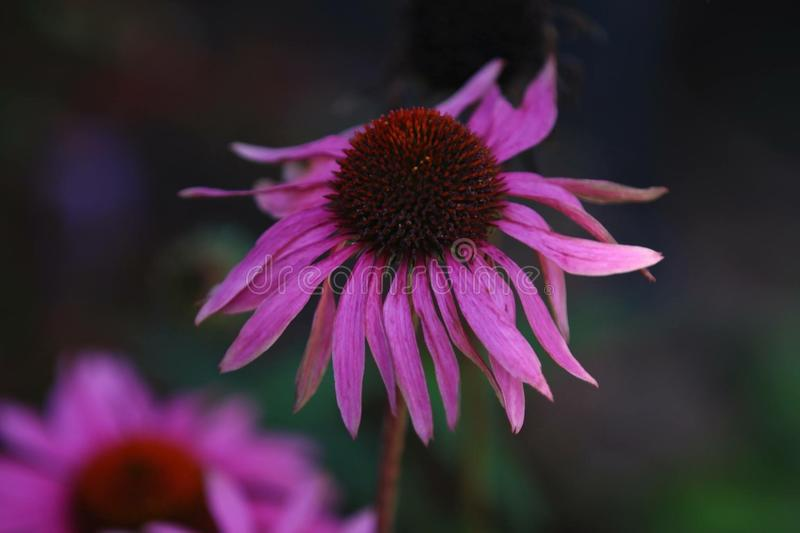 Flower in the fall royalty free stock photos