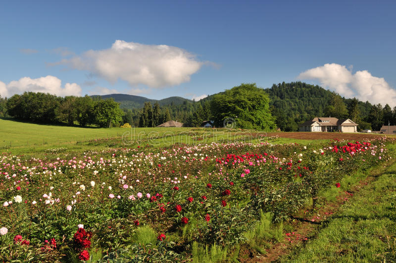 Download Flower Farm In Mission, British Columbia Stock Photo - Image: 14862478